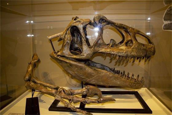 Dinosaurs of New Mexico exhibit