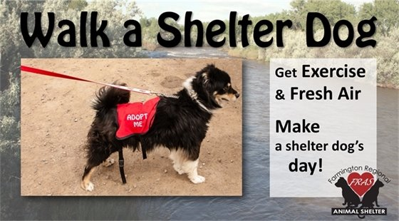 Walk a Shelter Dog. Get exercise and fresh air and make a shelter dog's day! Farmington Regional Animal Shelter.